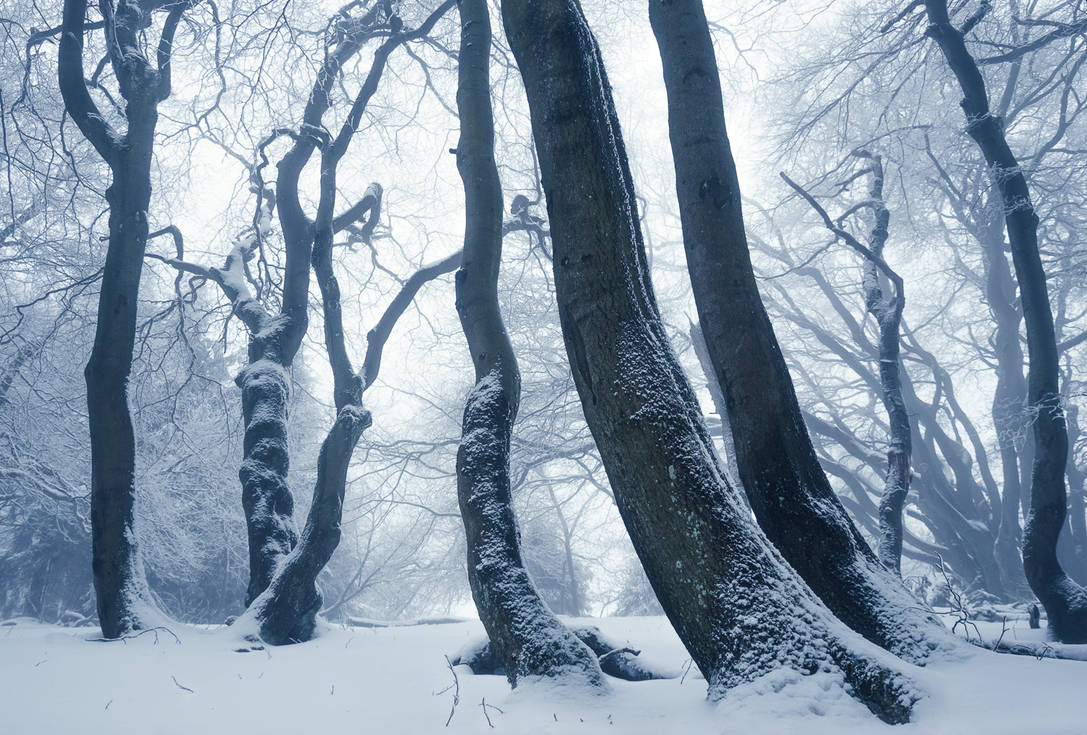 Winter Solitude by aw-landscapes