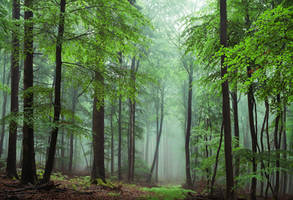 Green Elegance by aw-landscapes