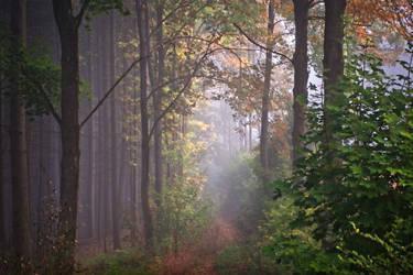 Path to Lorien