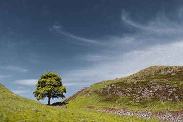 Feathery clouds over Sycamore Gap