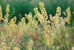 Nebraska Prairie Grass pt. 1