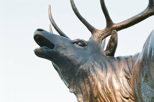 Bronze Bugling