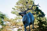 Bull Elk in Bronze