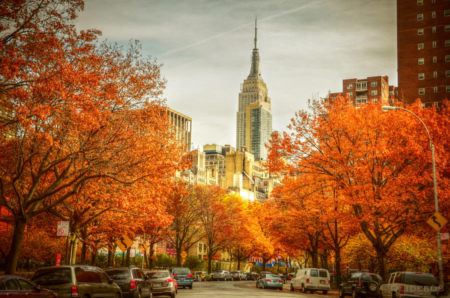 Street of New York by olideb08