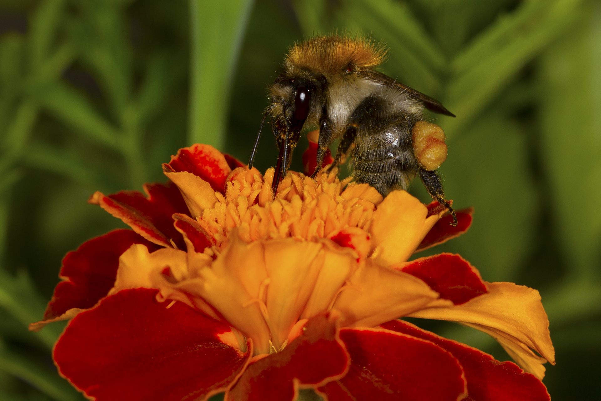 Need more polen