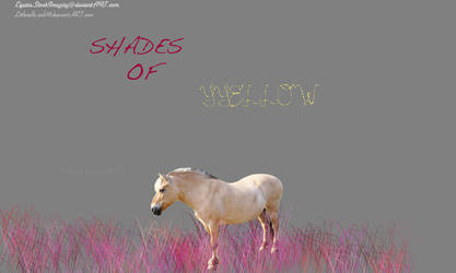 SHADES OF YELLOW - MANIP