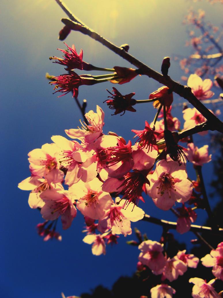 Sunny flowers by LadyRedRose