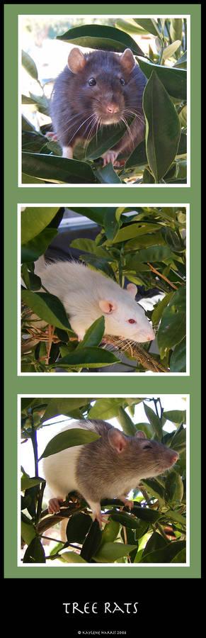 Tree Rats