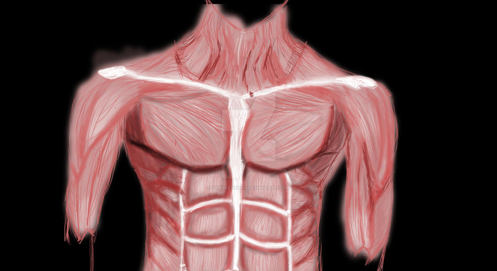 Human Anatomy Chest Muscles By Zangestu1990 On Deviantart