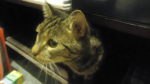 Kitty :3