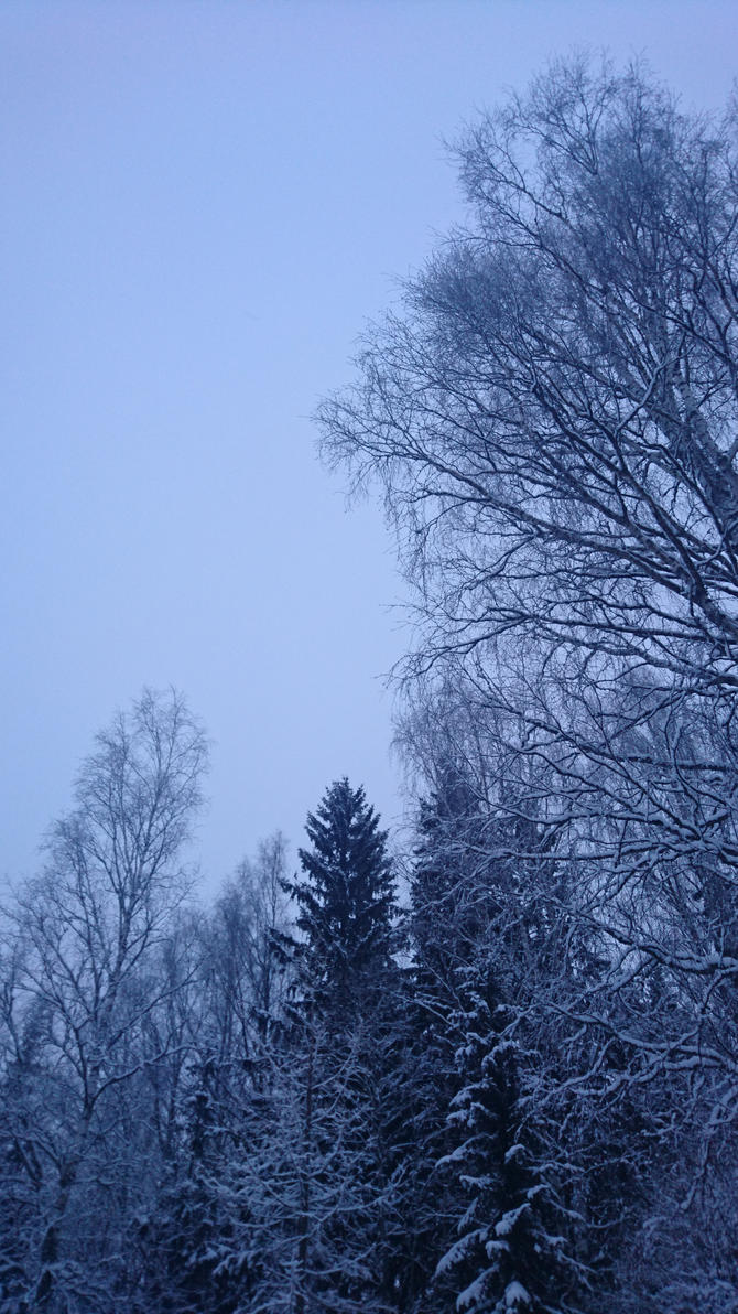 Stock trees winter by terab6