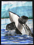 Killer Whale in Flight by DavisTheSecond