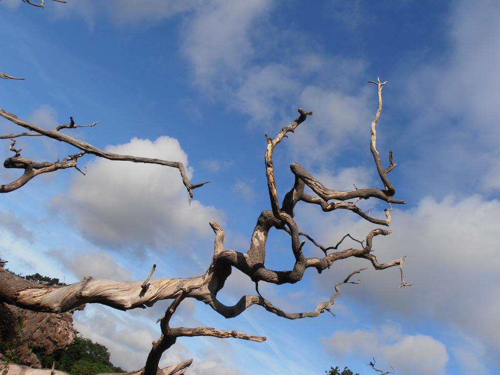 Twisting branches from a fallen tree by DominicChadwickART ...