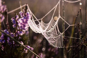 Tuhu by purplestripedbrain