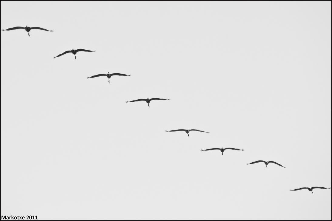 Grues by Markotxe
