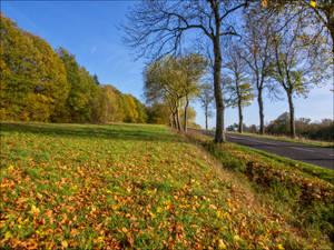 Route d'automne 4