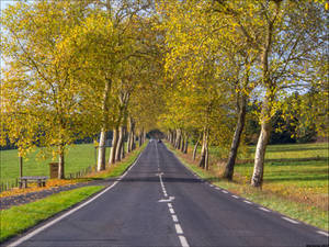 Route d'automne 5