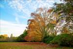 Quelques feux de l'automne