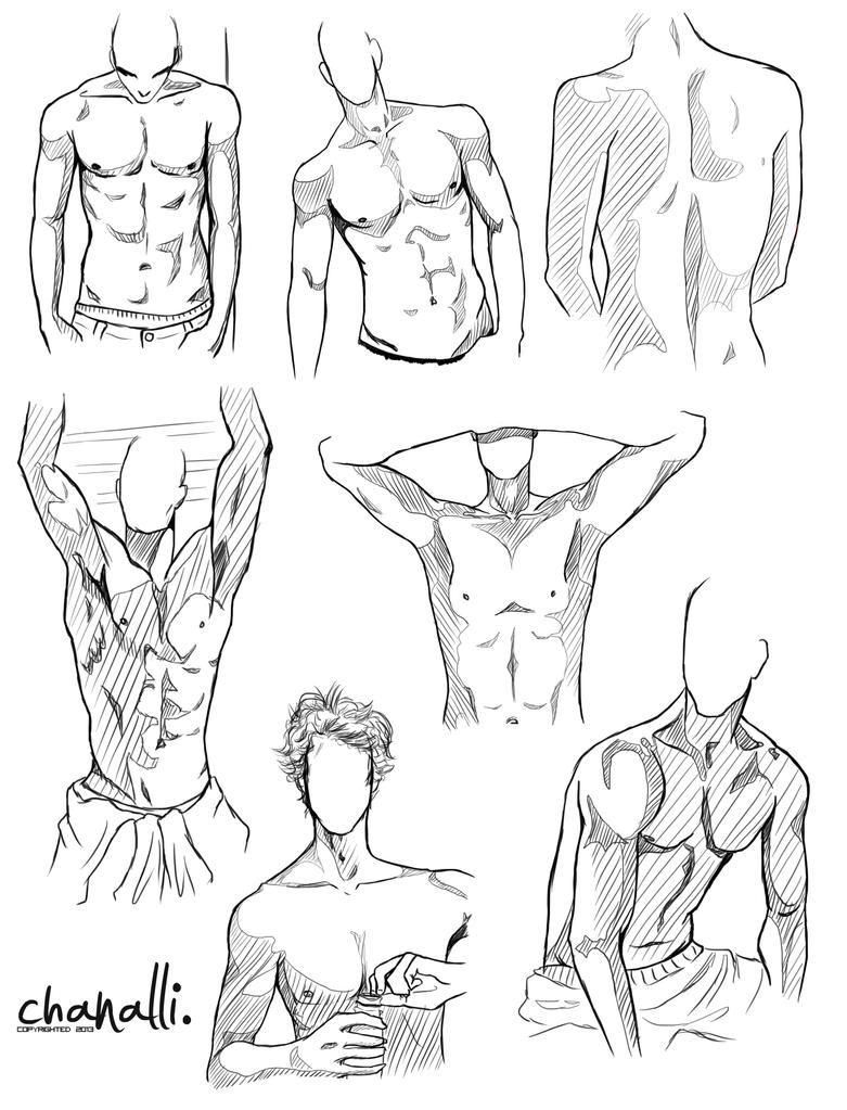 male anatomy 01 by alli-kun on DeviantArt