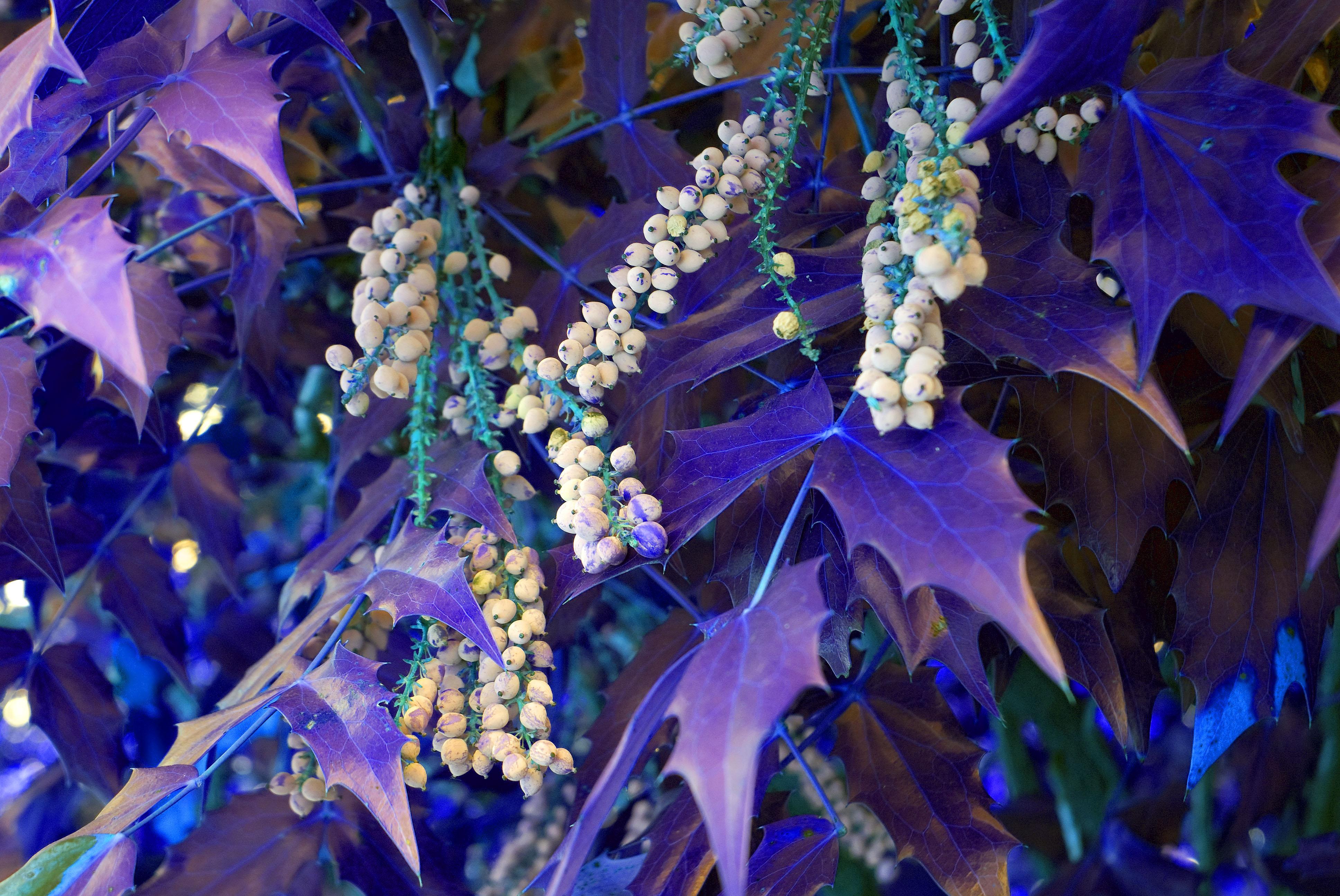 on leaf blue - photo #39