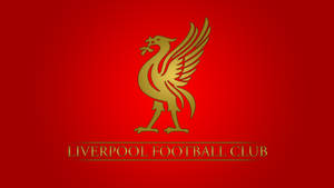 Liverpool by Calvey