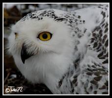 snowowl by Twins72