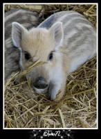 wild boar piglets by Twins72