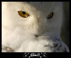 Snowowl 2 by Twins72