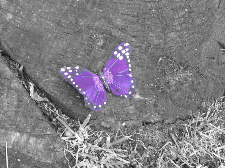 Pictures Of Real Purple Butterflies | www.imgkid.com - The ...