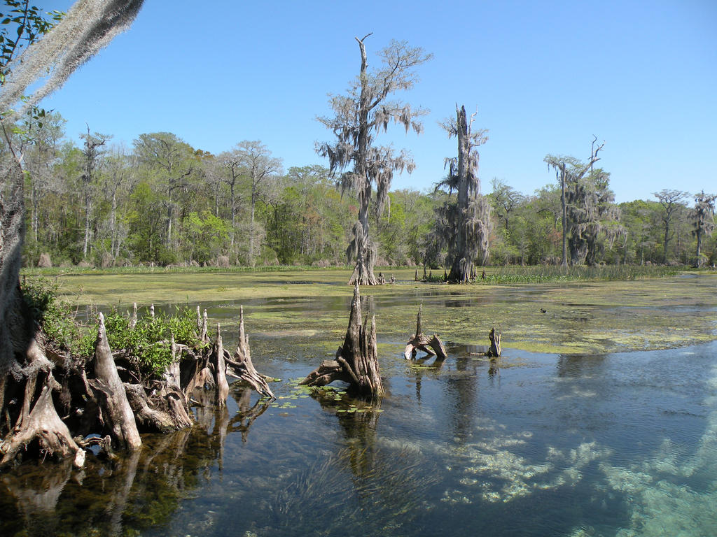 wakulla springs chat This is a list of fatal alligator attacks that occurred in the united  he was killed while snorkeling in the wakulla springs state park, wakulla county, florida by.