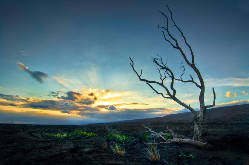 Hawaii, Flourishing by alierturk