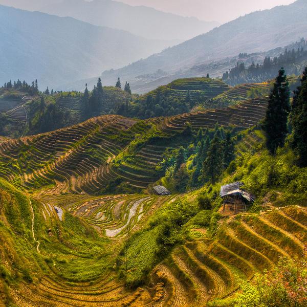 Longsheng, Rice Terrace in Fall by alierturk