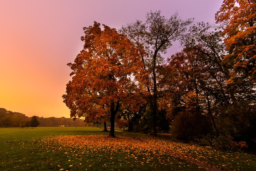 Munich, the fall in Englischer Garten by alierturk