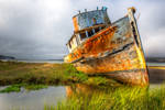 The permanent resident | Point Reyes, California
