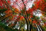 Portland, colors of fall