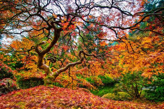 Neuronal Tree,Japenese Garden, Portland by alierturk