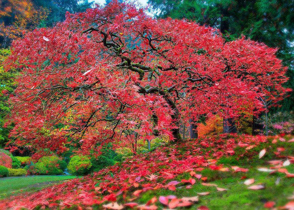 Portland, Japense Garden by alierturk