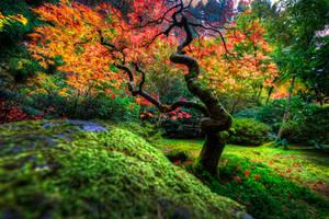 Japanese Garden | Portland by alierturk