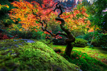 Japanese Garden   Portland by alierturk