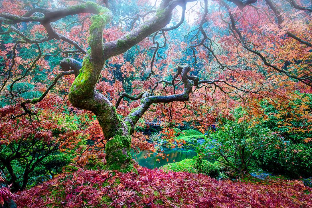 Portland   Japanese garden show yourself by alierturk