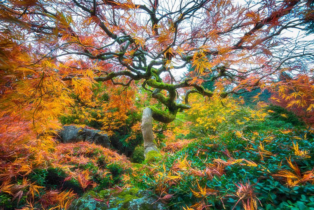 portland the magical garden by alierturk on deviantart