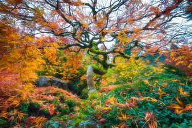 Portland, the magical garden by alierturk
