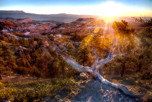 Bryce Canyon, hidden by alierturk