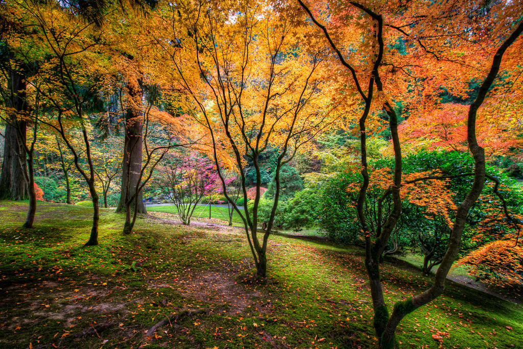 Portland, Japanese Garden visit by alierturk