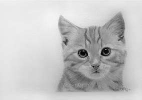 Kitten by marskueh