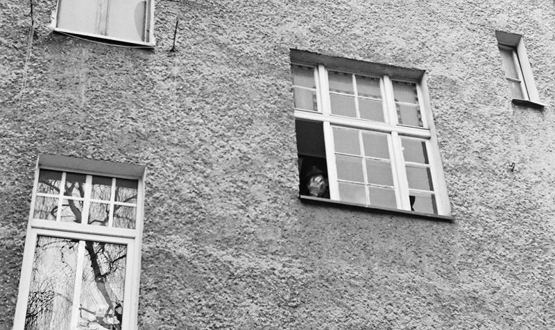 Pan z okienka by la-bella-maria