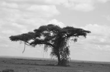 amboseli lone tree by shawzie