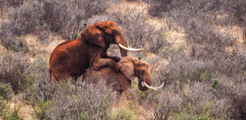 ELLIES MATING 1 by shawzie