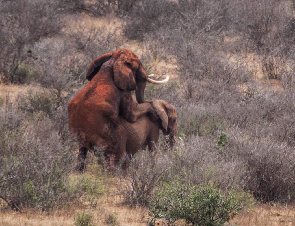 ELLIES MATING 3 by shawzie