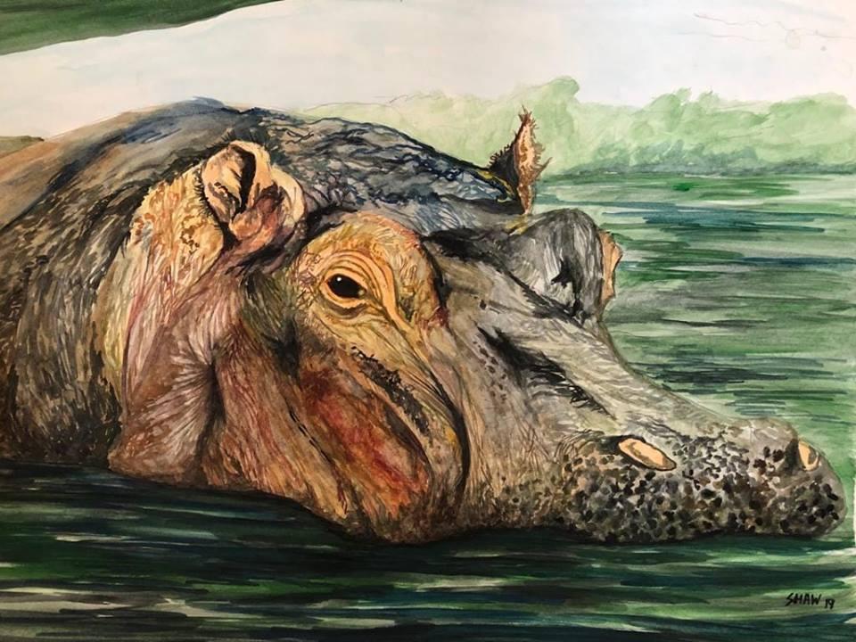 Hippo by shawzie